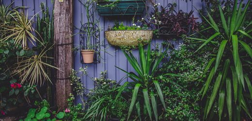 Why is it essential to have an indoor garden?